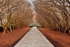 Bomen op bedekte Weg royalty-vrije stock afbeelding