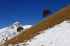Bomen op berg Stock Foto's