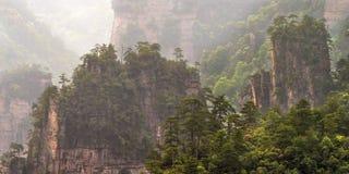 Bomen op berg Stock Afbeeldingen