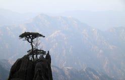 Bomen op bergbovenkant Stock Foto's