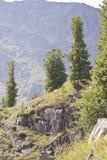 Bomen op berghelling Royalty-vrije Stock Afbeeldingen