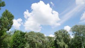 Bomen op de achtergrond van de hemel met wolken stock videobeelden