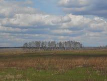 Bomen op de afstand stock afbeeldingen