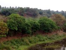 Bomen op de bank van de rivier Stock Foto