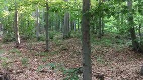 Bomen op de berg in de zomer stock video