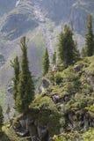 Bomen op de helling tegen de achtergrond van crum Stock Fotografie