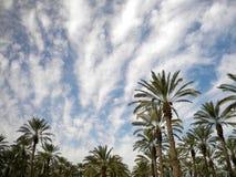 Bomen op de hemel royalty-vrije stock afbeelding