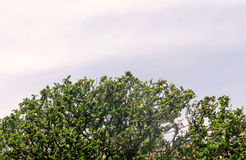 Bomen op de hemelachtergrond Stock Fotografie