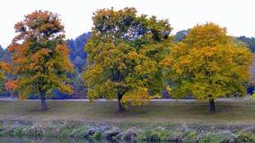 Bomen op de herfst Stock Foto