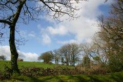 Bomen op de heuvel stock foto's