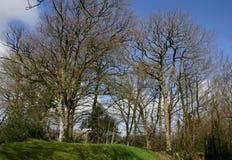 Bomen op de heuvel stock fotografie