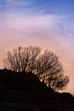 Bomen op de heuvel bij zonsondergang Stock Fotografie