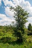 Bomen op de heuvels stock afbeelding