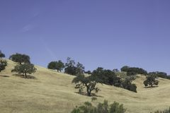 Bomen op de heuvels ergens in Californië royalty-vrije stock foto's