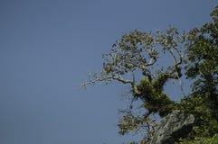 Bomen op de hoge pieken Stock Afbeelding