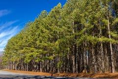Bomen op de Kant van de weg Royalty-vrije Stock Afbeelding
