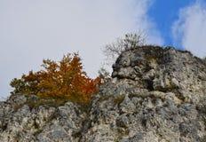 Bomen op de klip, de herfstmening Stock Afbeeldingen