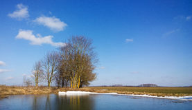 Bomen op de kust van de vijver Stock Afbeeldingen