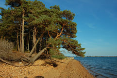 Bomen op de overzeese kust Stock Afbeeldingen