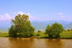 Bomen op de rand van een rivier Stock Foto