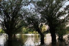 Bomen op de rivier, aardige aardachtergrond stock foto