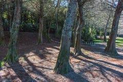 Bomen op de rivierbank royalty-vrije stock afbeeldingen
