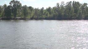 Bomen op de rivierbank stock video