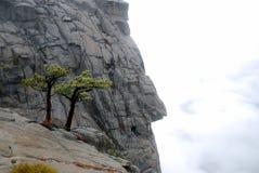 Bomen op de rots Royalty-vrije Stock Afbeelding