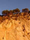 Bomen op de rots Royalty-vrije Stock Fotografie