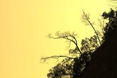 Bomen op de rots tegen een zonsonderganghemel Stock Foto's