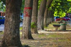 Bomen op de straat Stock Foto