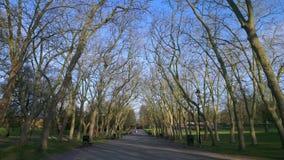 Bomen op de weg Stock Foto's