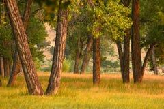 Bomen op de Zomerochtend royalty-vrije stock afbeeldingen