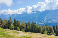Bomen op een achtergrond van bergen Stock Fotografie