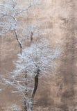 Bomen op een achtergrond van een muur royalty-vrije stock afbeelding