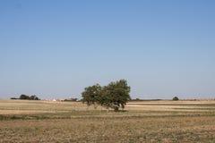 Bomen op een gebied Royalty-vrije Stock Foto