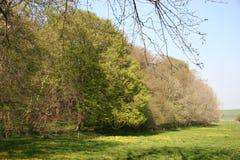 Bomen op een gebied Stock Foto