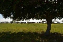 Bomen op een gebied Royalty-vrije Stock Afbeelding