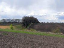 Bomen op een geploegd gebied dichtbij een weide met riet Stock Afbeelding