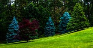 Bomen op een grasrijke heuvel. Stock Foto's