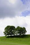 Bomen op een groene heuveltop Stock Afbeelding