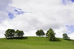 Bomen op een groene heuveltop Stock Foto