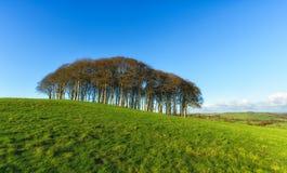 Bomen op een heuvel stock foto's