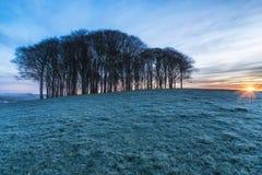 Bomen op een Heuveltop royalty-vrije stock afbeeldingen