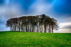 Bomen op een Heuveltop stock afbeelding