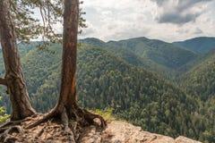 Bomen op een Klip stock afbeeldingen
