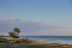Bomen op een kust van Saaremaa in Estland Royalty-vrije Stock Foto