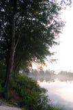 Bomen op een nevelige kust tijdens zonsopgang Royalty-vrije Stock Fotografie