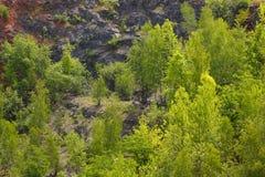 Bomen op een rotsachtige helling stock fotografie