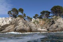 Bomen op een rotseiland Royalty-vrije Stock Fotografie